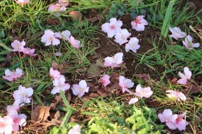 足元に落ちた花弁
