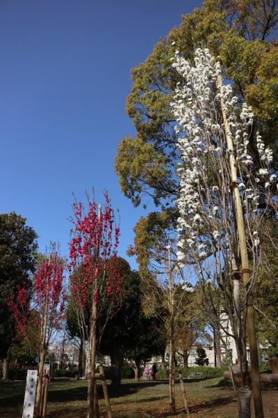 中原平和公園に植樹された「照手桃」