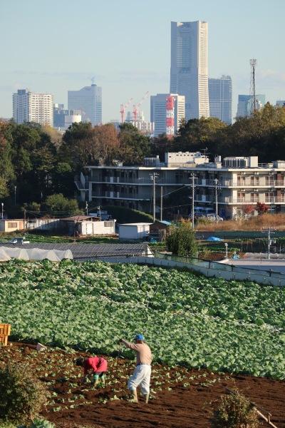 駅近くの高台の農地と、みなとみらい方面