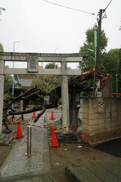 台風19号通過直後の倒木(10月14日時点)